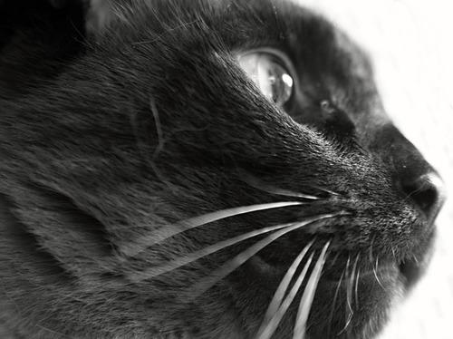 cat-252362_640.jpg