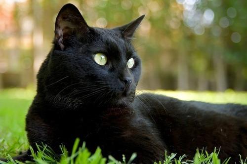 cat-418116_640.jpg