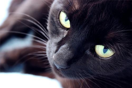 cat-428093_1280.jpg