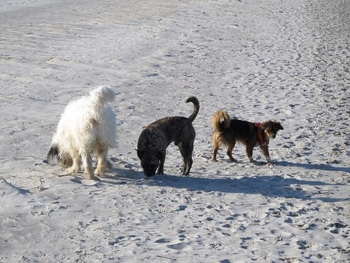 dogs-403700_640.jpg