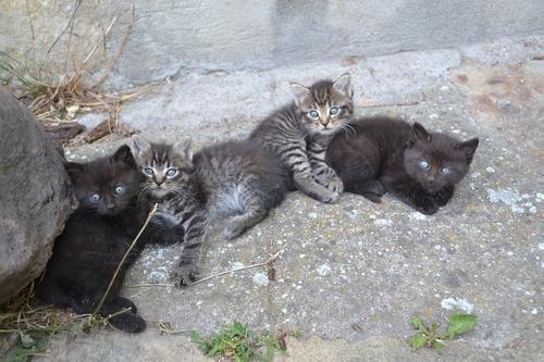 kittens-952480_1280.jpg