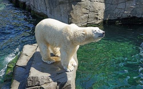 polar-bear-751233_640.jpg